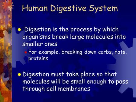 Human Digestive System  Digestion is the process by which organisms break large molecules into smaller ones  For example, breaking down carbs, fats,