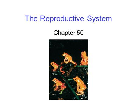 The Reproductive System Chapter 50. 2 Sexual vs. Asexual Reproduction Sexual reproduction requires meiosis to produce haploid gametes: sperms and eggs.