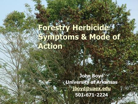 1 Forestry Herbicide Symptoms & Mode of Action John Boyd University of Arkansas 501-671-2224.