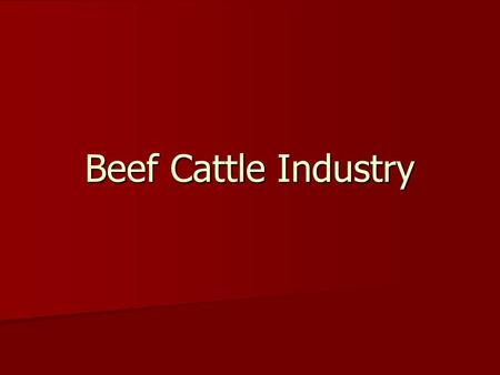 Beef Cattle Industry.