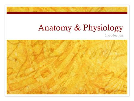 Anatomy & Physiology Introduction.