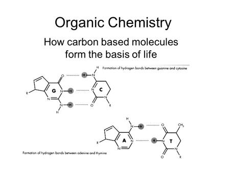 an overview of the carbon the basis for life organism Why is carbon important to living organisms a: carbon is released into the air through the process called what is an organism that eats producers or other.