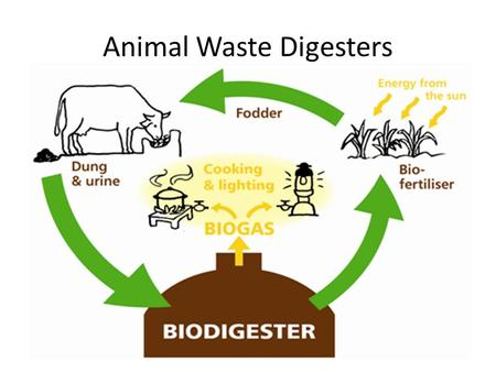 Animal Waste Digesters. Bio-diesel Bio diesel can be made with many different plant residues, weedy species, algae Depending on the source, bio-diesel.
