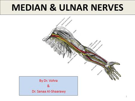 1 MEDIAN & ULNAR NERVES By Dr. Vohra & Dr. Sanaa Al-Shaarawy.