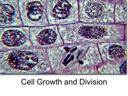 Cell Growth and Division. Cell Growth Limits to growth –Stress on DNA –Difficulty moving nutrients/wastes across membrane Ratio of surface area to volume.