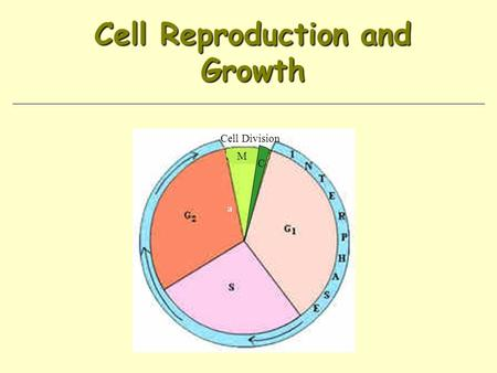 Cell Reproduction and Growth Cell Division M C. Limits on Cell Size Diffusion is more efficient over short distances DNA limitations (has to be able to.