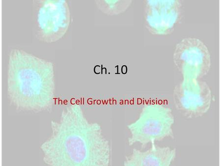 Ch. 10 The Cell Growth and Division. How do you grow? Remember….you started out as a single cell (a zygote) made from the fusing of your dad's sperm and.