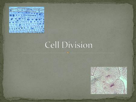 Create two identical cells from one cell Purposes: Create a new organism Growth and Repair.
