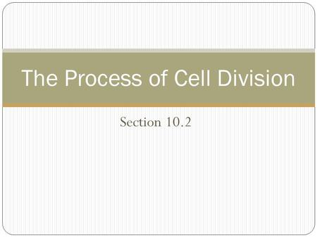 The Process of Cell Division