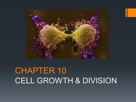 CHAPTER 10 CELL GROWTH & DIVISION. 10-1 Cell Growth  How do we grow?  Our cells divide!