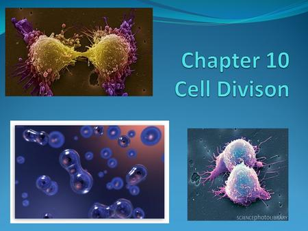 Chapter 10 Cell Divison.