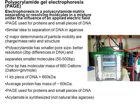 Polyacrylamide gel electrophoresis (PAGE) Electrophoresis in a polyacrylamide matrix separating or resolving molecules in a mixture under the influence.