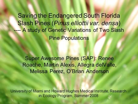 Saving the Endangered South Florida Slash Pines (Pinus elliottii var. densa) ---- A study of Genetic Variations of Two Slash Pine Populations Super Awesome.