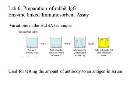 Variations in the ELISA technique Used for testing the amount of antibody to an antigen in serum Lab 6. Preparation of rabbit IgG Enzyme linked Immunosorbent.