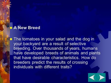  A New Breed  The tomatoes in your salad and the dog in your backyard are a result of selective breeding. Over thousands of years, humans have developed.