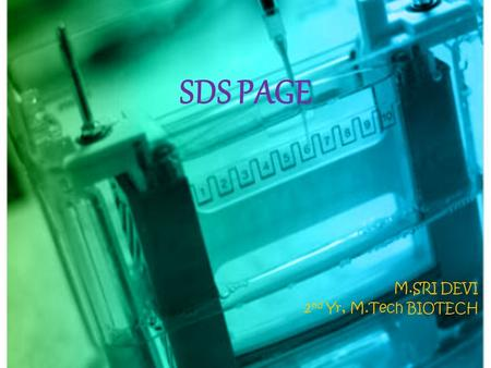 SDS PAGE M.SRI DEVI 2 nd Yr, M.Tech BIOTECH. SDS PAGE Sodium dodecyl sulphate polyacrylamide gel electrophoresis is a type of denaturing electrophoresis,