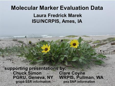 Molecular Marker Evaluation Data Laura Fredrick Marek ISU/NCRPIS, Ames, IA WRPIS, Pullman, WA supporting presentations by: grape SSR informationpea SNP.
