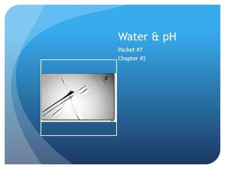Water & pH Packet #7 Chapter #2. Introduction Most abundant liquid in the world Makes up at least half of all living organisms and up to 95% of some species.
