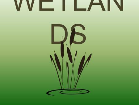 WETLAN DS. Wetlands are lands where saturation with water is the dominant factor determining the nature of soil development and the types of plant and.