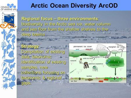 Arctic Ocean Diversity ArcOD Regional focus – three environments: biodiversity in the Arctic sea ice, water column and sea floor from the shallow shelves.
