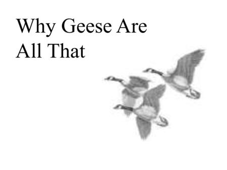 Why Geese Are All That.