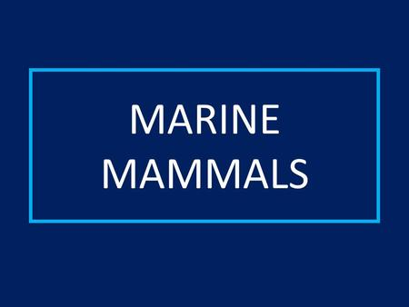 MARINE MAMMALS.  Mammals have a 4 chambered heart.  Mammals are warm-blooded.  Mammals have hair/fur.  Mammals have mammary glands.  Mammals give.