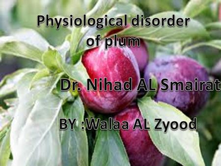 Physiological disorder of plum