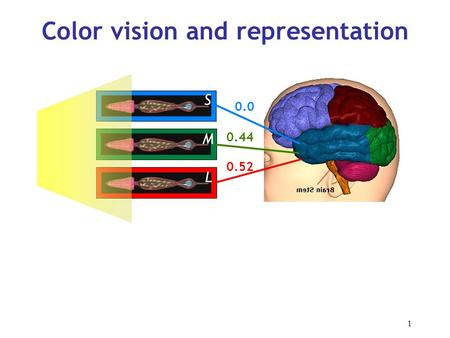 1 Color vision and representation 0.44 0.0 0.52 S M L.