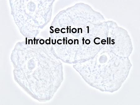 Section 1 Introduction to Cells. Animal Cell nucleus cell membrane cytoplasm.