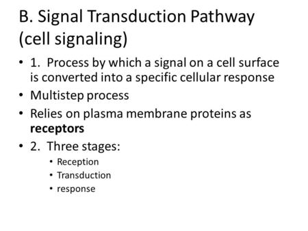 B. Signal Transduction Pathway (cell signaling)