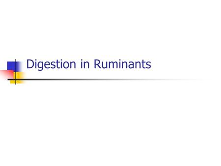 Digestion in Ruminants