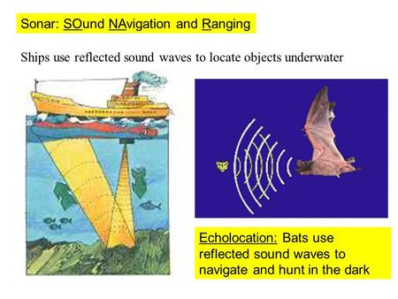 Sonar: SOund NAvigation and Ranging Ships use reflected sound waves to locate objects underwater Echolocation: Bats use reflected sound waves to navigate.
