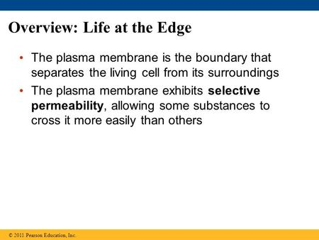 Overview: Life at the Edge The plasma membrane is the boundary that separates the living cell from its surroundings The plasma membrane exhibits selective.