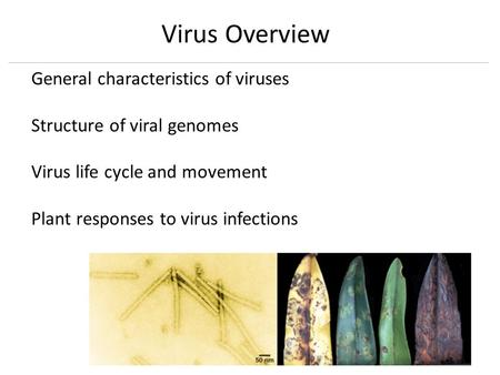 General characteristics of viruses Structure of viral genomes Virus life cycle and movement Plant responses to virus infections Virus Overview.