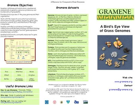 Gramene Objectives Develop a database and tools to store, visualize and analyze data on genetics, genomics, proteomics, and biochemistry of grass plants.