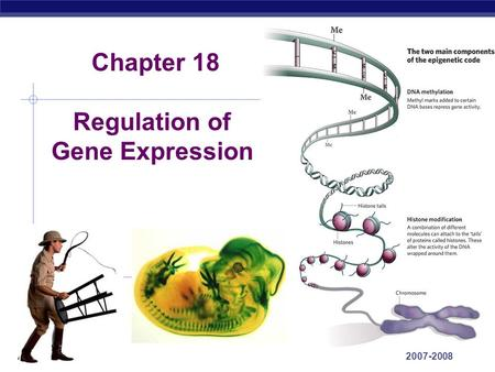 ap bio essay gene regulation University of georgia past essays-(1959-1995) past essay 's from mr knight's ap bio page: past ap free response-by topic gerry rau's.