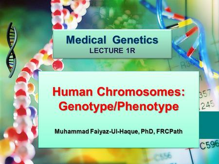Human Chromosomes: Genotype/Phenotype Muhammad Faiyaz-Ul-Haque, PhD, FRCPath Human Chromosomes: Genotype/Phenotype Muhammad Faiyaz-Ul-Haque, PhD, FRCPath.