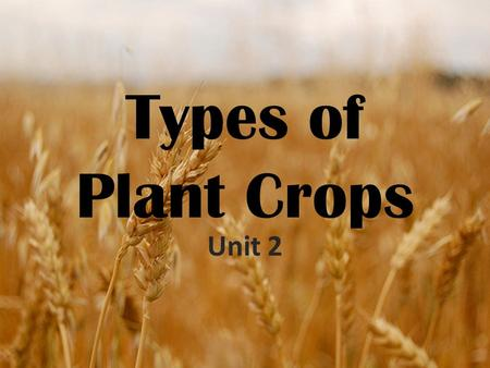 Types of Plant Crops Unit 2. Food Groups Examine the items in front of you. Work with the other members of the class to put the items into six groups.