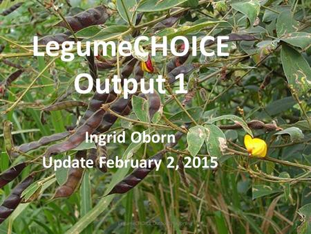 LegumeCHOICE Output 1 Ingrid Oborn Update February 2, 2015 LegumeCHOICE Output 1 Reporting.