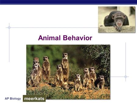 AP Biology Animal Behavior meerkats. AP Biology Why study behavior?  Evolutionary perspective…  part of phenotype  acted upon by natural selection.