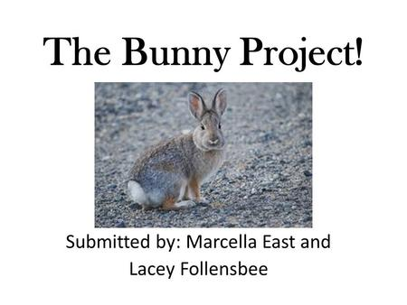 The Bunny Project! Submitted by: Marcella East and Lacey Follensbee.
