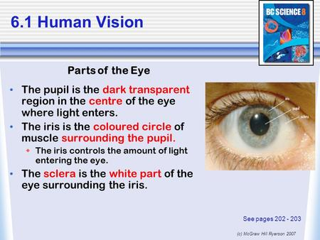 (c) McGraw Hill Ryerson 2007 6.1 Human Vision The pupil is the dark transparent region in the centre of the eye where light enters. The iris is the coloured.