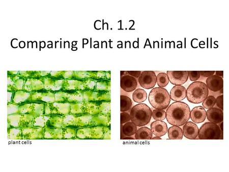 Ch. 1.2 Comparing Plant and Animal Cells