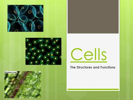 The Structures and Functions