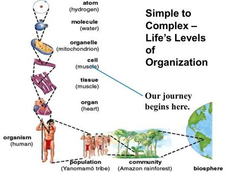 Our journey begins here. Simple to Complex – Life's Levels of Organization.
