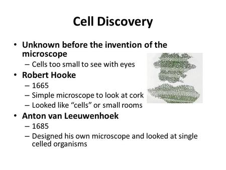 Cell Discovery Unknown before the invention of the microscope – Cells too small to see with eyes Robert Hooke – 1665 – Simple microscope to look at cork.