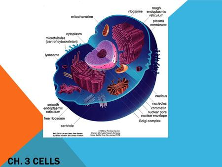 CH. 3 CELLS. Gives the cell shape, structure and helps it move Made of:  Microfilaments  Intermediate filaments  Microtubules CYTOSKELETON.