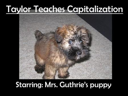 Taylor Teaches Capitalization Starring: Mrs. Guthrie's puppy.