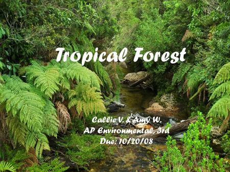 Tropical Forest Callie V. & Amy W. AP Environmental, 3rd Due: 10/20/08.