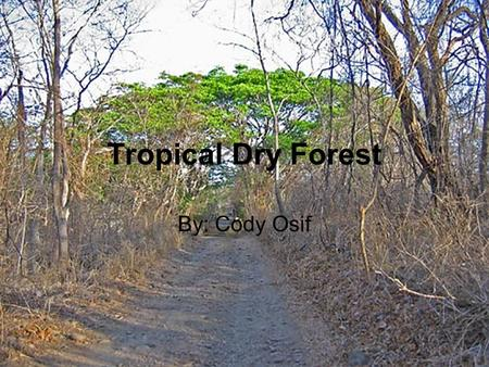 Tropical Dry Forest By: Cody Osif. Climate Tropical Dry Forests climate are warm year-round, and may receive several hundred centimeters of rain per year.